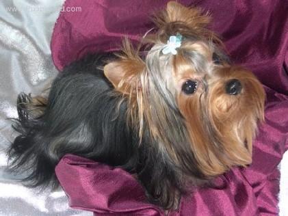 Dog Breeder | Elverta, CA